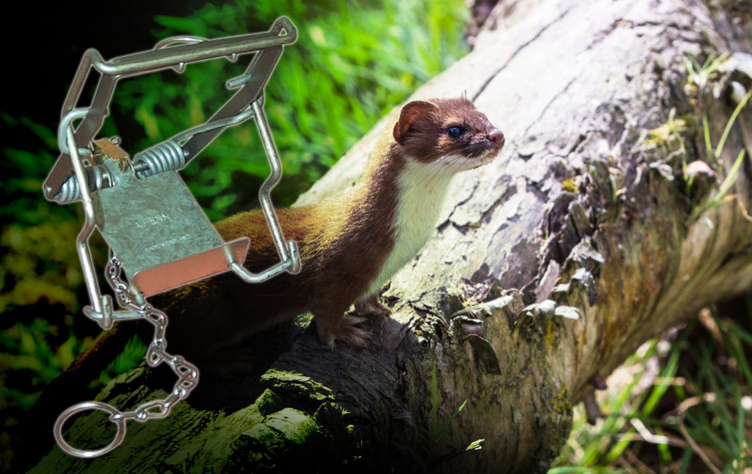 Fenn traps and implementation of the Agreement on International Humane Trapping Standards (AIHTS)
