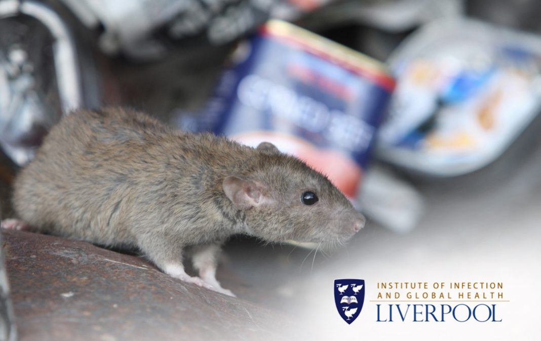 A tale of two rats: exploring the role of rats in everyday life