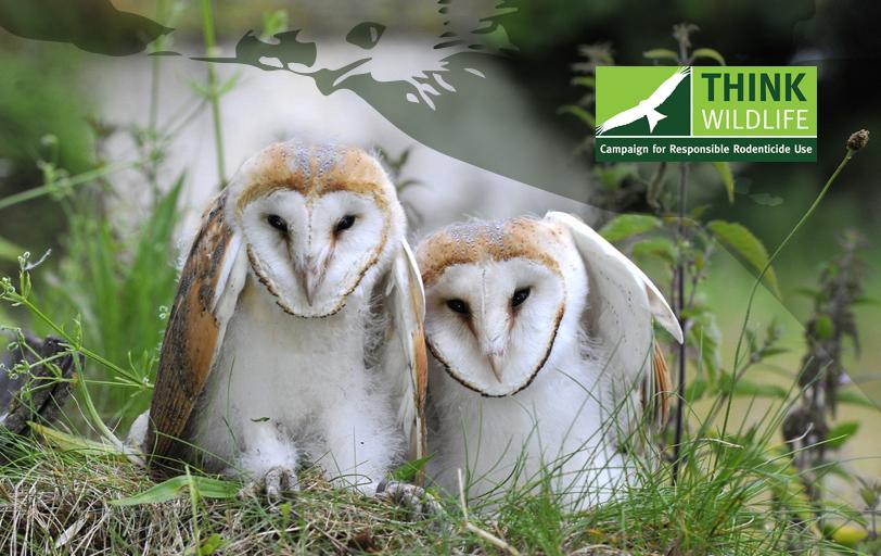 NEW CRRU STUDY MONITORS UK BARN OWL BREEDING