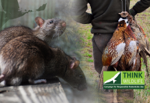 Tougher rodenticide rules
