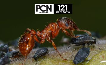 PCN 121 Out Now
