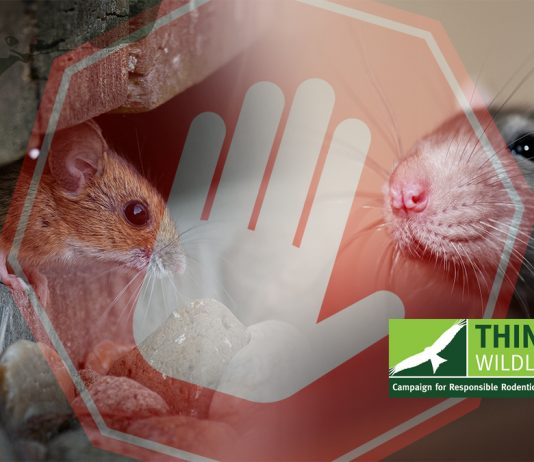 Rodenticide resistance testing halted by lab closure