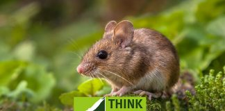 Rodenticide alert prompts reminder of permitted target species